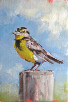 meadow lark songbird